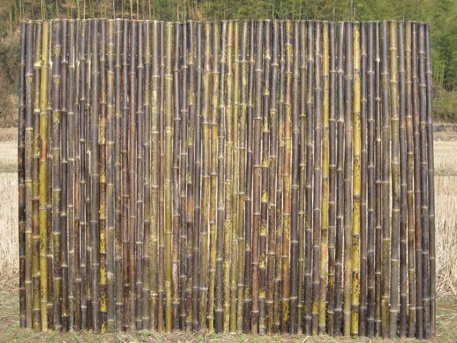 במבוק גדר
